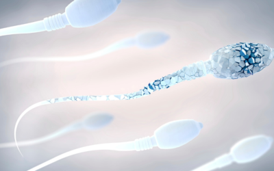 Struggling with Miscarriage? Damaged Sperm Could Be the Reason.
